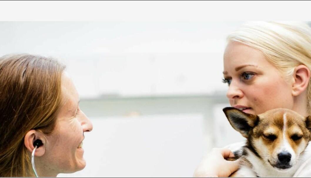 Vil du jobbe med MR-diagnostikk innen veterinærmedisin ved NMBU?